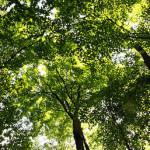 Baumpflege und Baumfällung in Hamburg - Baumpflege Heckmann