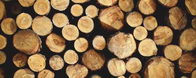 Baumfallgenehmigung Wann Ist Ein Antrag Notig Hausgarten Net 11