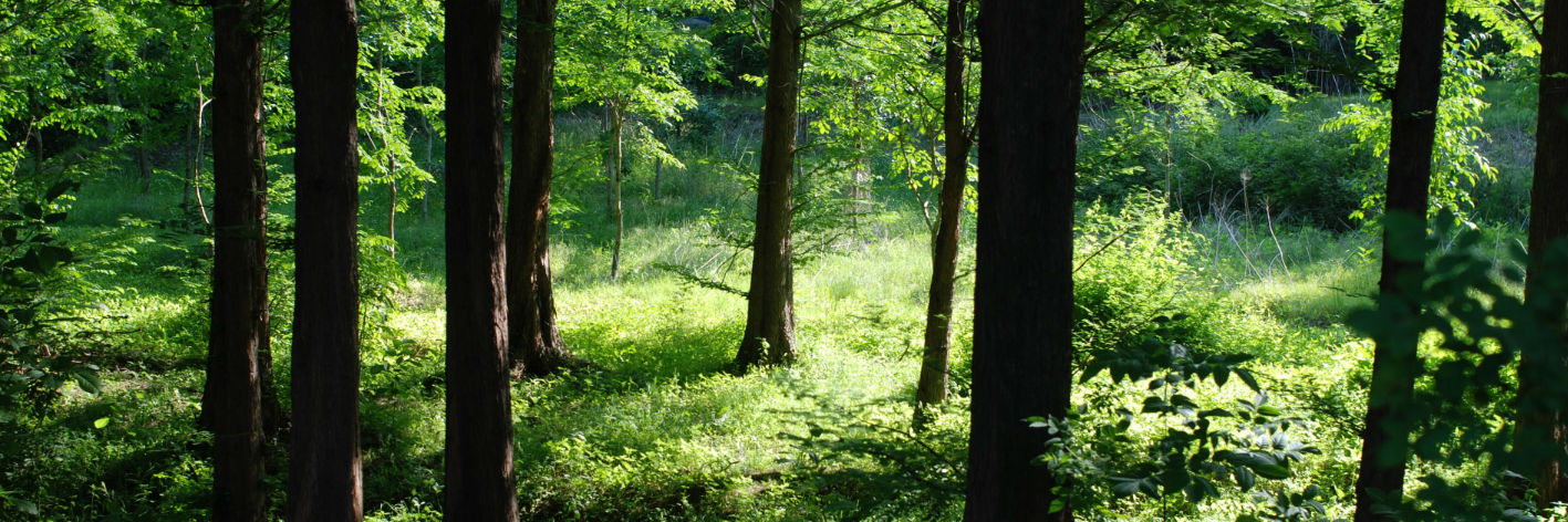 Forstdienstleistungen in und um Hamburg