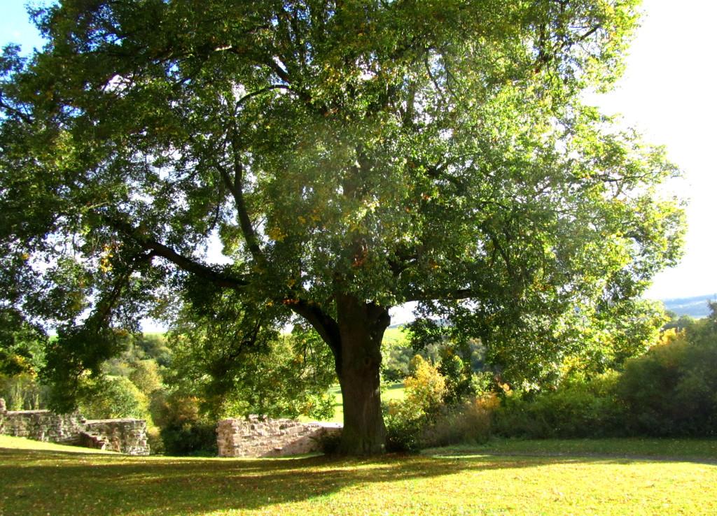 Professionelle Baumpflege und schwierige Baumfällungen mit Seilklettertechnik - Baumpflege Heckmann
