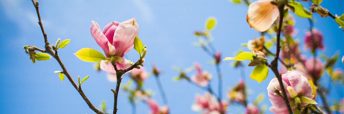 Gehölz- und Obstbaumschnitt