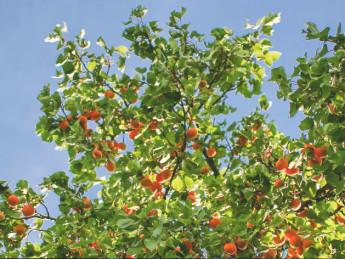 Obstbaumschnitt in Hamburg - Baumpflege Heckmann