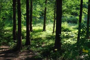 Forstdienstleistungen in Hamburg - Baumpflege Heckmann
