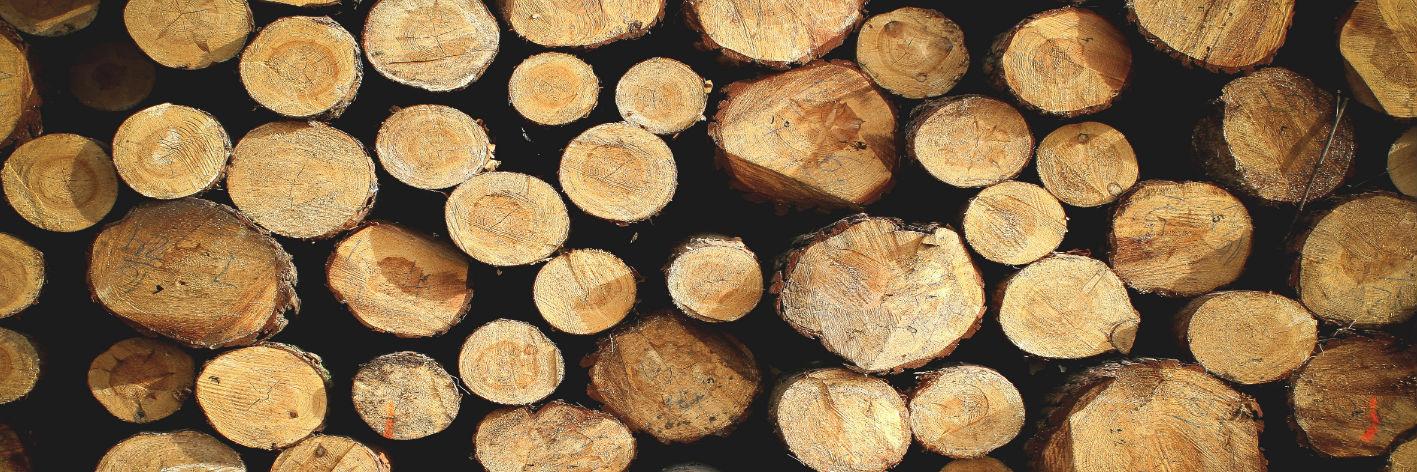 Fachgerechte Baumfällung